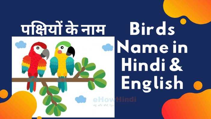 30 Birds Name in Hindi and English – Pakshiyon ke Naam