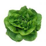 butterhead-green-lettuce